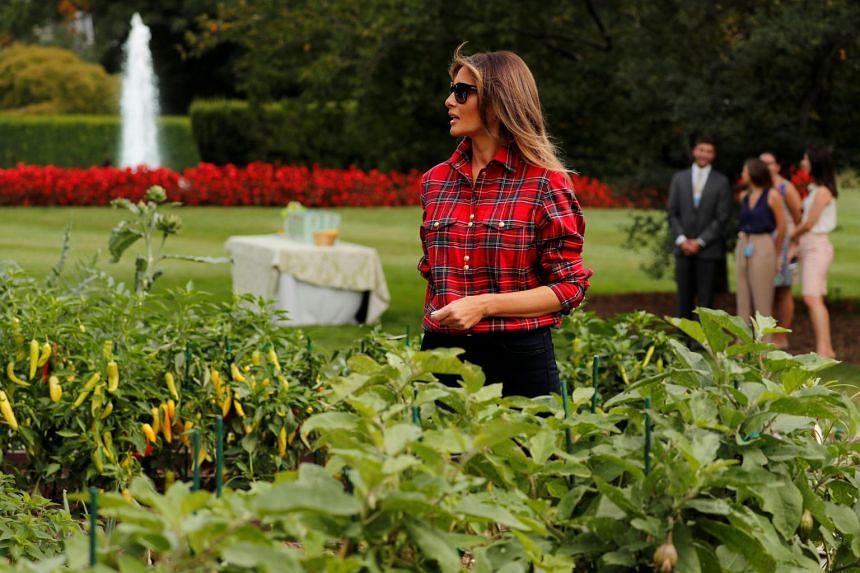 Trump arrives to work in the White House kitchen garden.