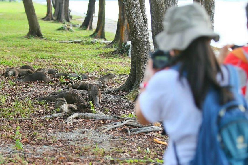 Participants of a Nature Society (Singapore)-organised otter-spotting event photographing the animals near Marina South Pier on Sunday morning.