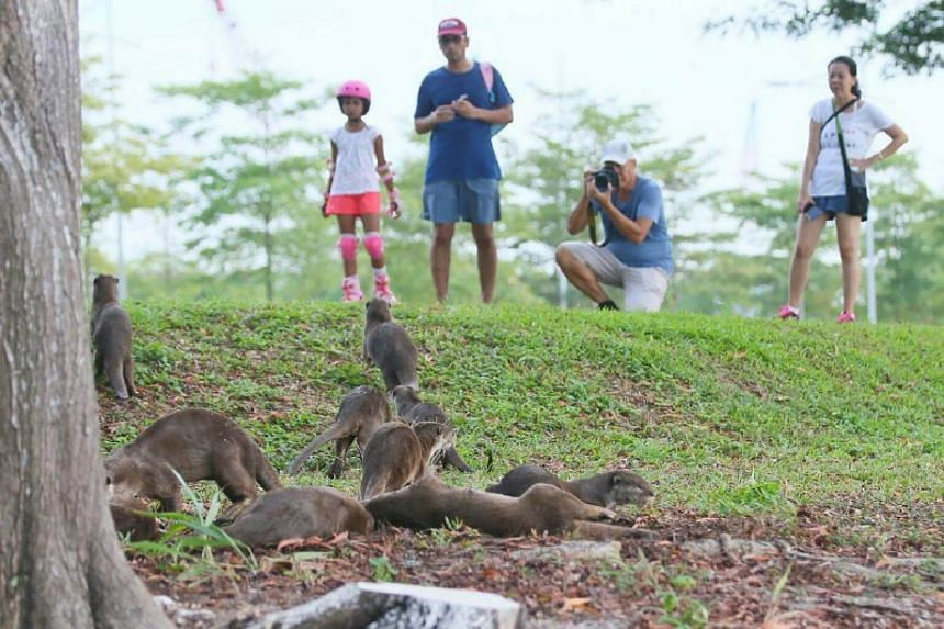 (From left) Aadhya Kumar, 7, supply chain professional Manish Kumar, 36, retiree Patrick Ng, 63, and finance professional Ng Soon Lee, 48, watching the Bishan family of otters near Marina South Pier on Sunday morning.