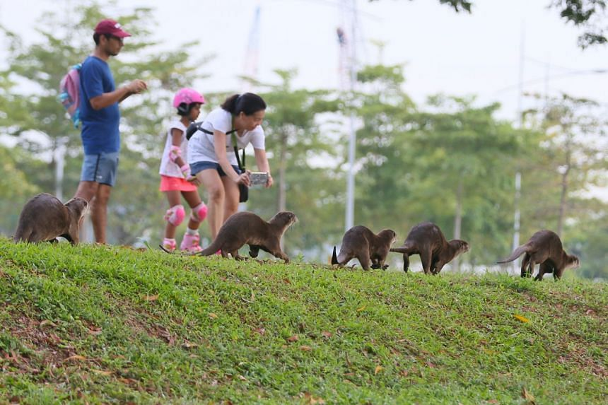 Supply chain professional Manish Kumar, 36, his daughter Aadhya, 7, and finance professional Ng Soon Lee, 48, watching the Bishan family of otters scamper past them at Marina South Pier.