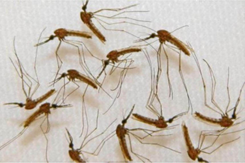 MOH is closely monitoring the development of the 'super malaria' parasite situation in other South-east Asian countries.