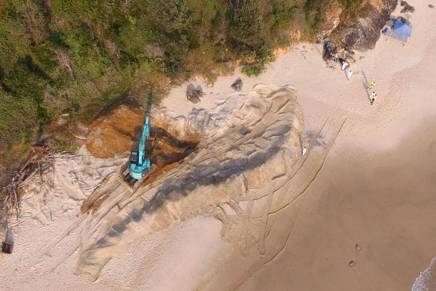 A massive humpback whale carcass is removed using a digger, on Nobbys Beach at Port Macquarie, Australia, on Sept 25, 2017.