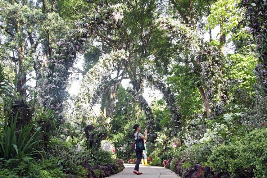 A visitor enjoying the greenery of the Silver Arches at the National Orchid Garden at the Singapore Botanic Gardens.
