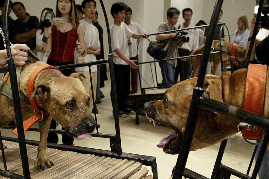 Dogs That Cannot Touch Each Other, which features four pairs of pit bulls on non-motorised treadmills, is one of the works that were pulled from the exhibition Art And China After 1989: Theatre Of The World show at the Guggenheim.