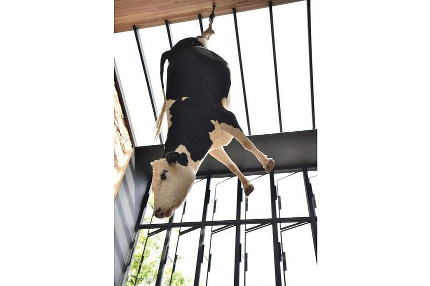 Owners Federico and Melissa Pisanelli, defended their decision to hang the large Friesian-Hereford cow from its hind legs, saying they wanted to remind patrons of how meat was sourced.