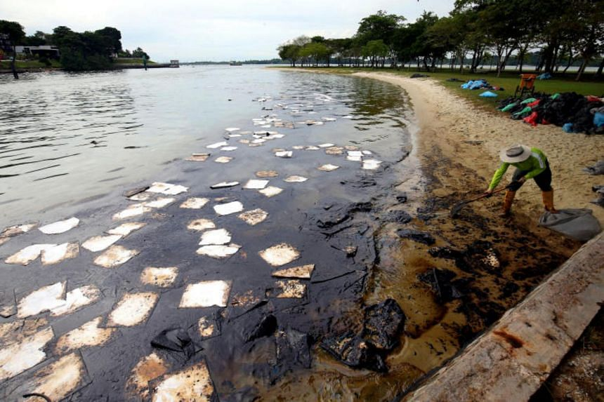 A worker brings up oil absorbents, which look like large swathes of cotton wool, to clean up an oil spill in the Johor Strait at Changi Beach on Jan 5, 2017.