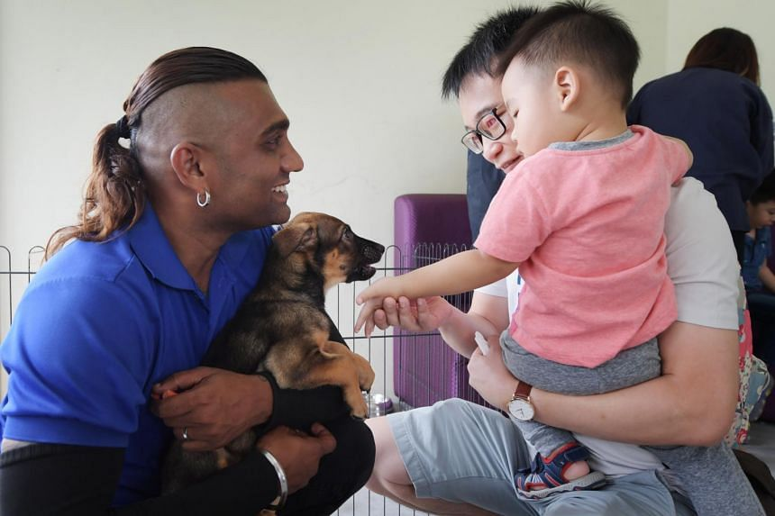 Shelter Supervisor Suresh Sundramurthi holds a 2.5-month-old cross-breed dog, Noel, as Mr Sunny Leong and his son Damien, reach out to stroke him.