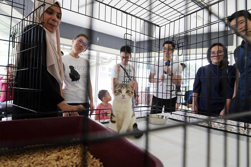 Three-month-old Hodor, waits for visitors to play with him at the World Animal Day celebration at the SPCA at Sungei Tengah.