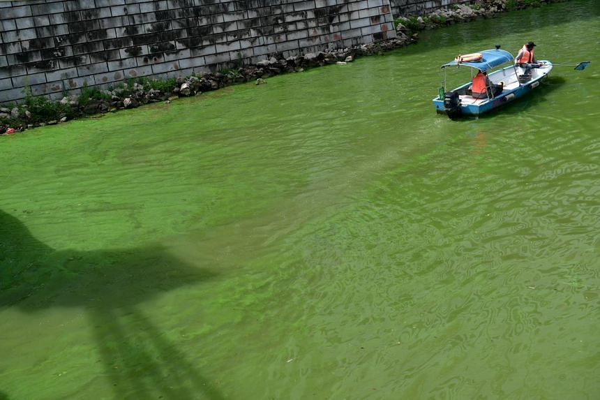 An algae bloom has turned some parts of the Singapore River into an emerald green colour, on Oct 2, 2017.