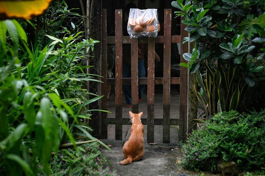3.49PM: Stray cat ''Niao gong'' sits in front of landlord Sng Mui Hong's gate. A bag of buns had been left for Ms Sng by resident Seah Yong Choi, 55, as a little token for the kampung's ''towkay''.