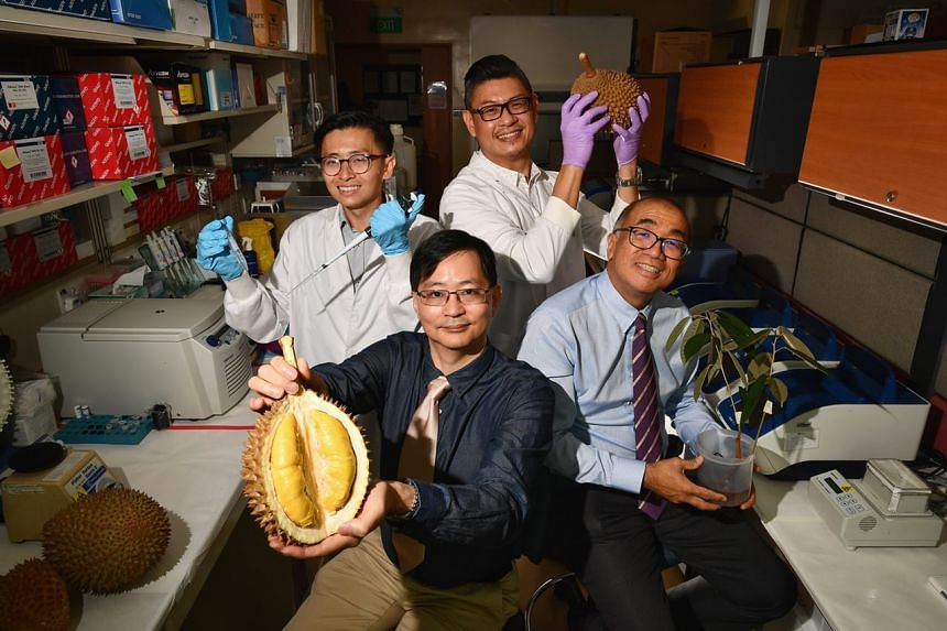 Scientists from the Humphrey Oei Institute of Cancer Research and Duke-NUS Medical School, Singapore have achieved a world first by deciphering the complete genetic map of durians.
