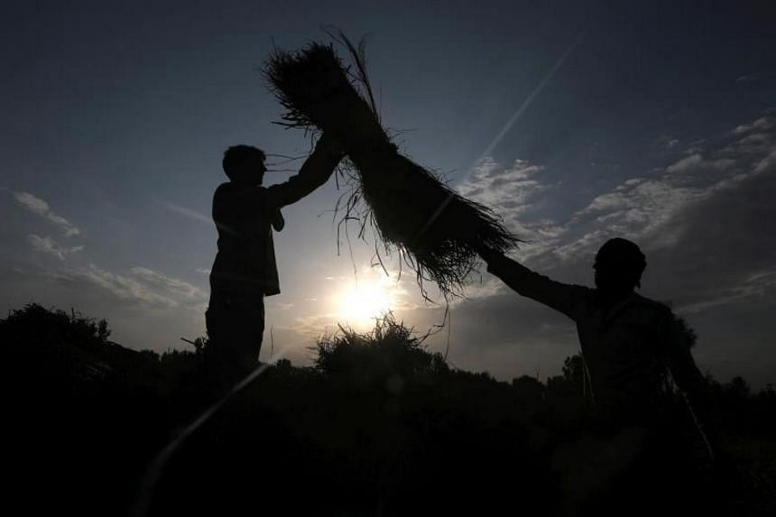 The farmers in the western state of Maharashtra, one of India's most important agricultural regions, died after using the dangerous pesticides without wearing protective gear.