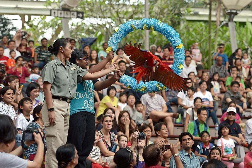 Top: An artist's impression of the new Bird Park's immersive walk-in aviary. Above: A macaw performing at the High Flyers Show. When the Bird Park moves to Mandai, shows will be done in a mesh-covered amphitheatre to prevent birds from escaping.