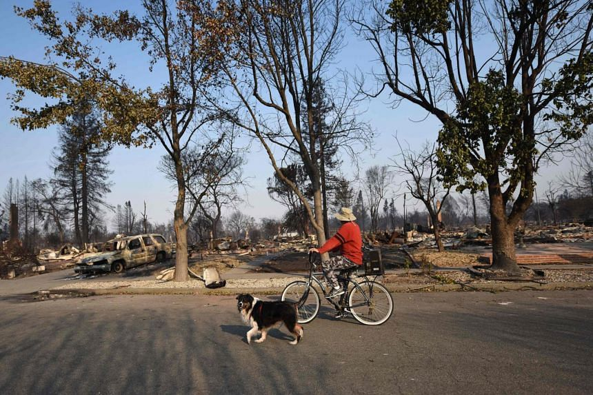 Local resident Wayne Reagan rides his bike with his dog Jay through a neighborhood totally destroyed by wildfire in Santa Rosa, California.