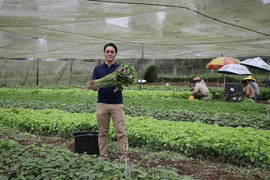 Mr Desmond Khoo, CEO and founder of Eden PurelyFresh Farm, plans to make use of indoor farming technology to boost productivity and make crops more resilient to weather elements.