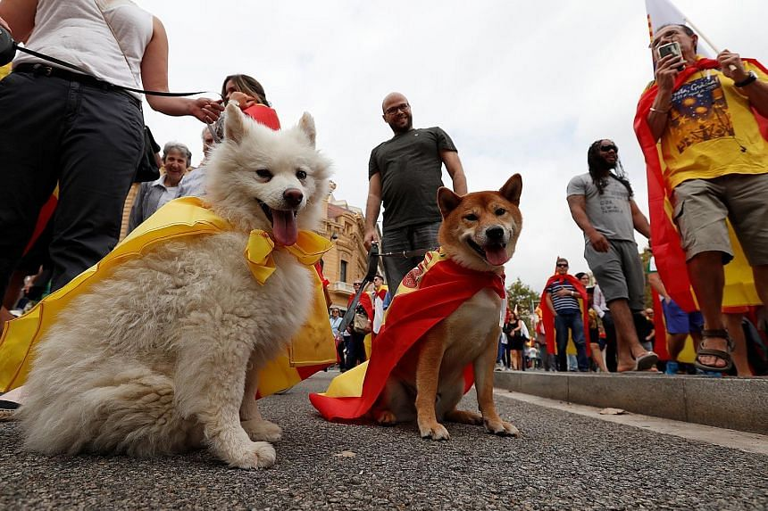 People out with their pets to celebrate Spain's national day yesterday in the Catalan capital Barcelona, where separate pro-unity rallies were held. Catalans are roughly evenly split on the independence issue, going by polls.