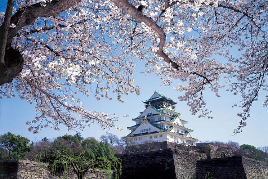 The sakura blossom season at Osaka Castle Park in Japan.