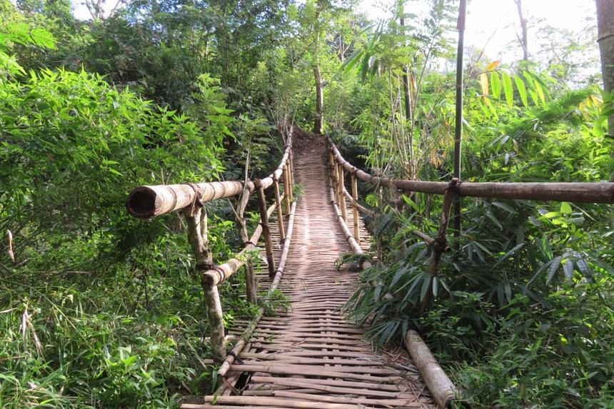 The three-hour hike through the forest was mostly uphill, and passed by this bamboo bridge.