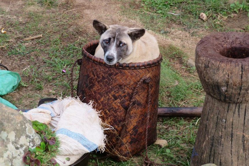 Some animals roam freely around the village, including chickens, cats and dogs, such as this one sitting in a basket for absolutely no reason at all.