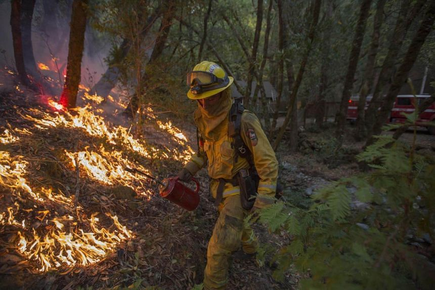 A firefighter uses a drip torch to set a backfire to protect houses in Adobe Canyon during the Nuns Fire near Santa Rosa, California on Oct 15, 2017.