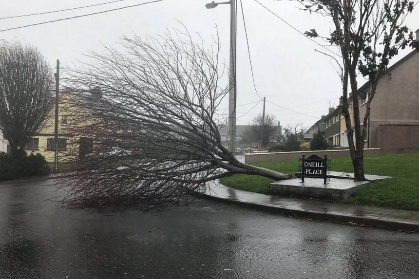 An uprooted tree lies in a road as storm Ophelia hits Cork, Ireland on Oct 16, 2017.