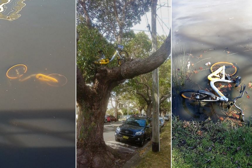 oBikes being abandoned in a tree and in the Yarra River.