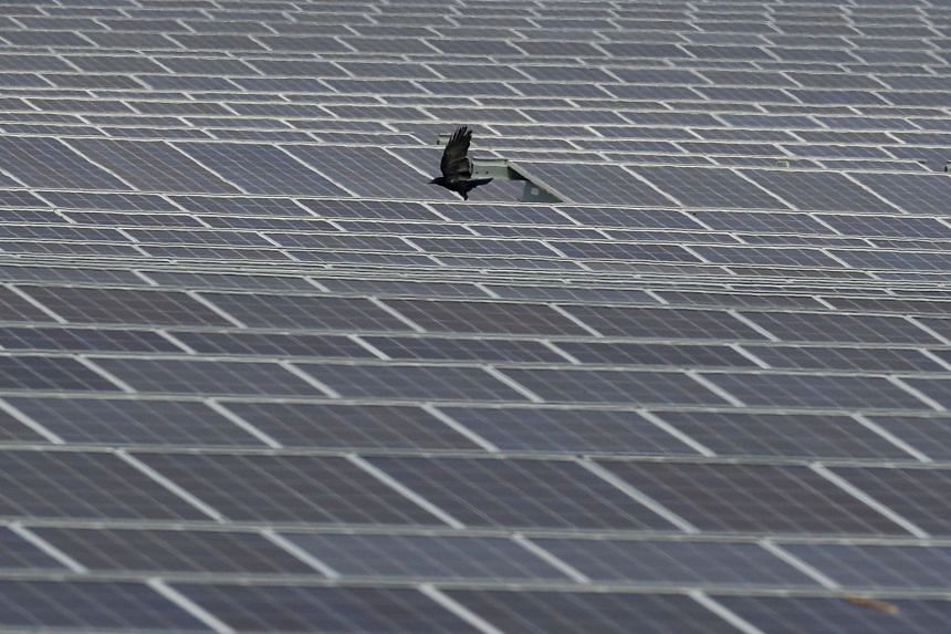 A crow flies over panels at a solar power farm in Britain.