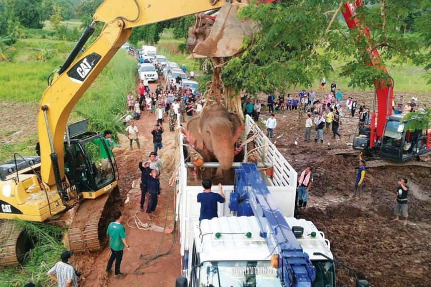 Teams of rescuers, villagers and civilians spent almost six hours moving Tara the elephant from the bank of the Chompu canal into the truck, so that it could be taken to an elephant hospital.