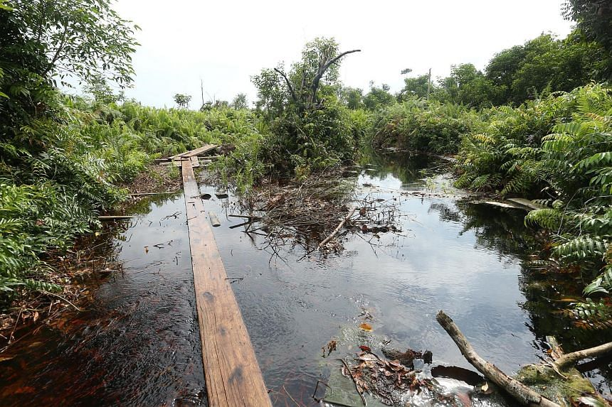 Plantations on deep peat cannot replant after the next harvest. Instead, they must work with the ministry to negotiate land swops to replant on non-peatlands.