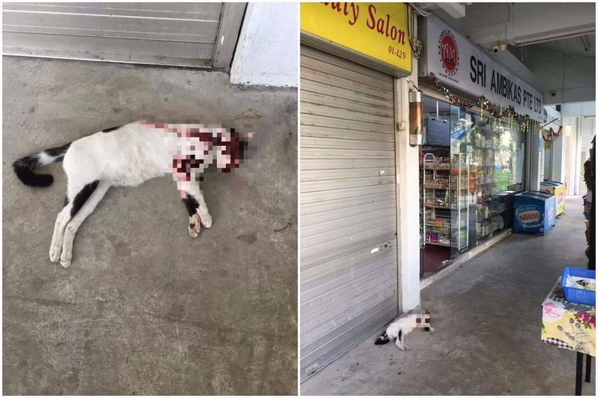 According to the Facebook post, the bloodied carcass of the black and white cat was discovered on Tuesday morning at Block 261, Yishun Street 22.