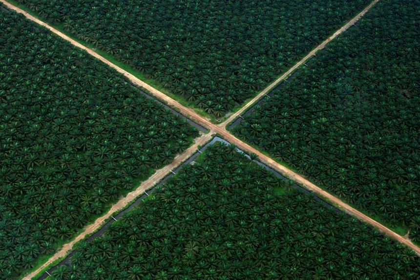An aerial view of a palm oil plantation in South Sumatra province. Scientists are warning the country that exchanging its rainforests for palm oil plantations risks exacerbating the effects of climate change.