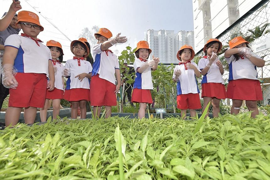 Children from PCF Sparkletots Preschool@Bukit Gombak Block 395A taking a break at a small plot of Chinese spinach that they grew. The plot is in a garden along the Bukit Gombak-Hong Kah North trail, one of two new community garden trails launched on