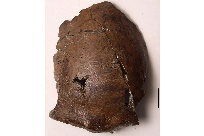 The cranium of a person who lived in what's now Papua New Guinea, 6,000 years ago.