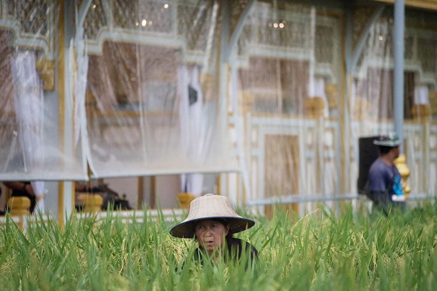 A worker tending to rice stalks at the entrance to the grounds of the cremation site for King Bhumibol Adulyadej last week. The king's idea was if you can make good use of the soil, keep crops green, maintain water flow and raise an appropriate numbe