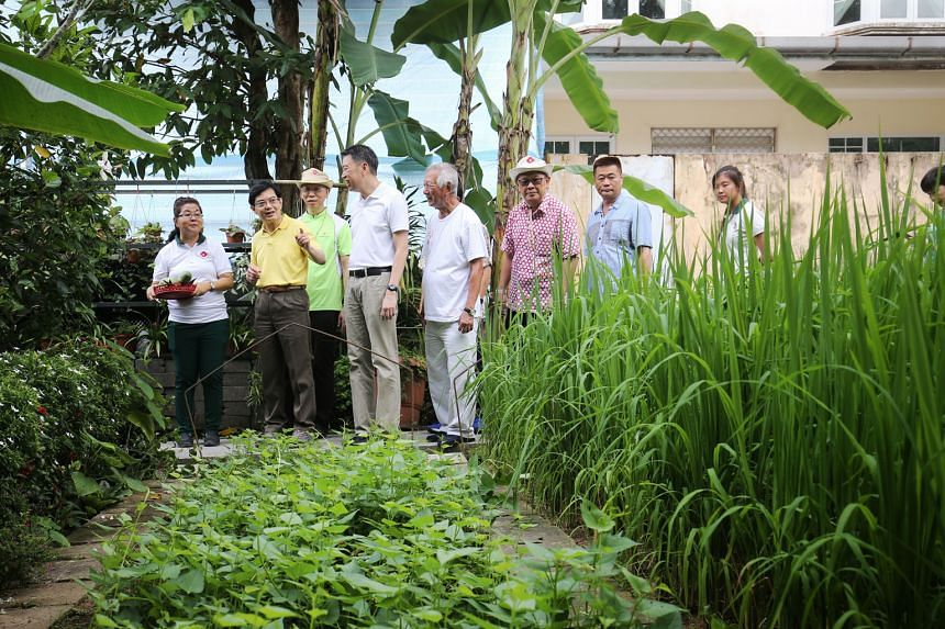 Finance Minister Heng Swee Keat (in yellow) and Tanjong Pagar GRC MP Melvin Yong (fourth from left) visiting a community garden managed by residents in Goldhill estate in Moulmein-Cairnhill.