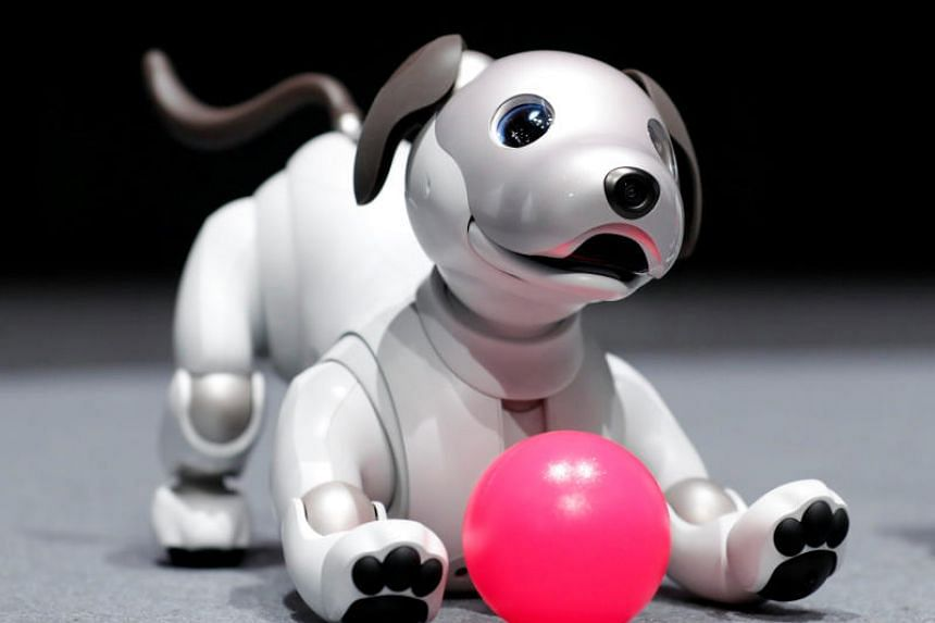 Aibo comes with an array of sensors, cameras and microphones and boasts internet connectivity.