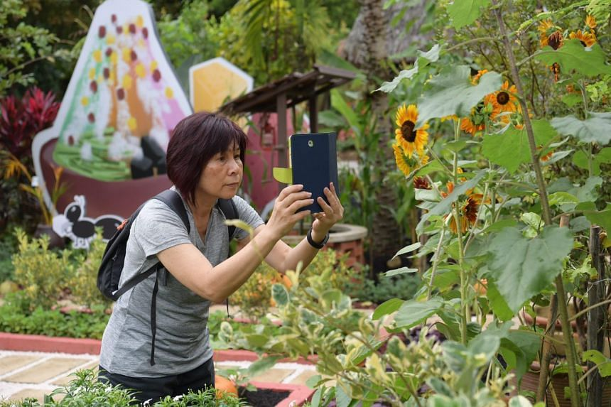 Visitors at the first day of the Community Gardens Festival at HortPark on Nov 3, 2017.