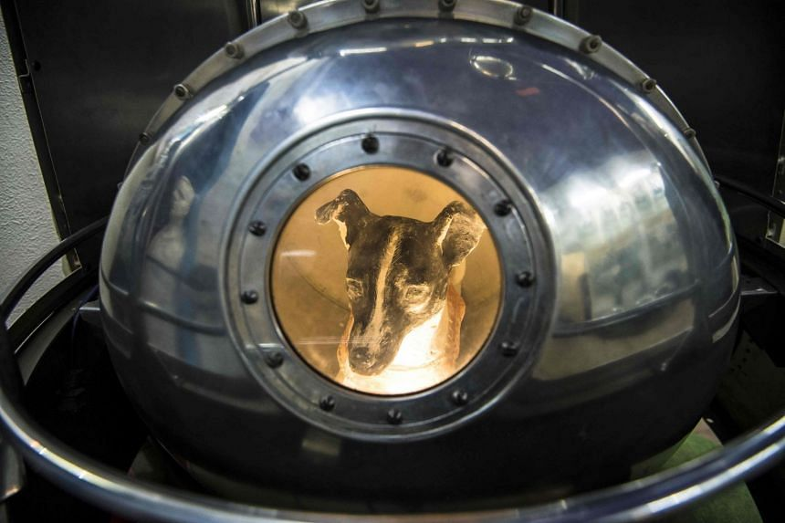 An effigy of Laika the dog, the first living creature in space, inside a replica of satellite Sputnik II at the Central House of Aviation and Cosmonautics in Moscow.