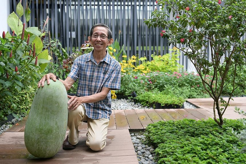 Mr Ivan Loh, 71, with his 25kg winter melon, which won him the Heaviest Winter Melon prize and $500 at the Community Garden Edibles Competition.