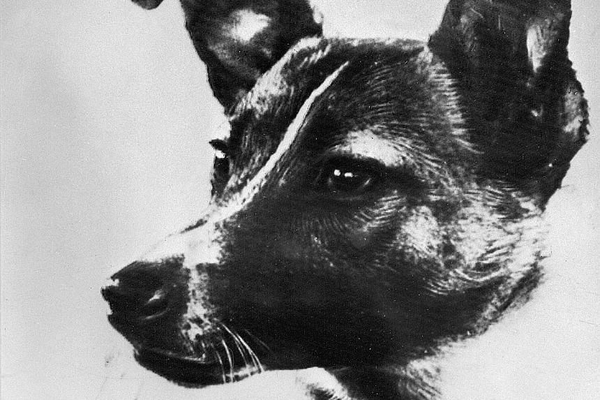 Laika the dog was sent up to space in a satellite on Nov 3, 1957.