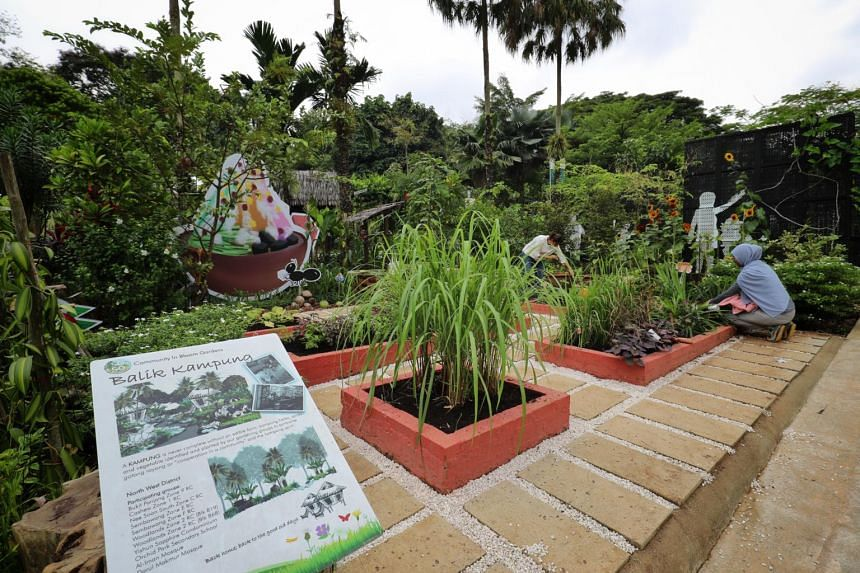 """Plants on display at the Community Garden Festival. NParks aims to build 1,000 """"allotment gardens"""" in 10 parks by 2019."""