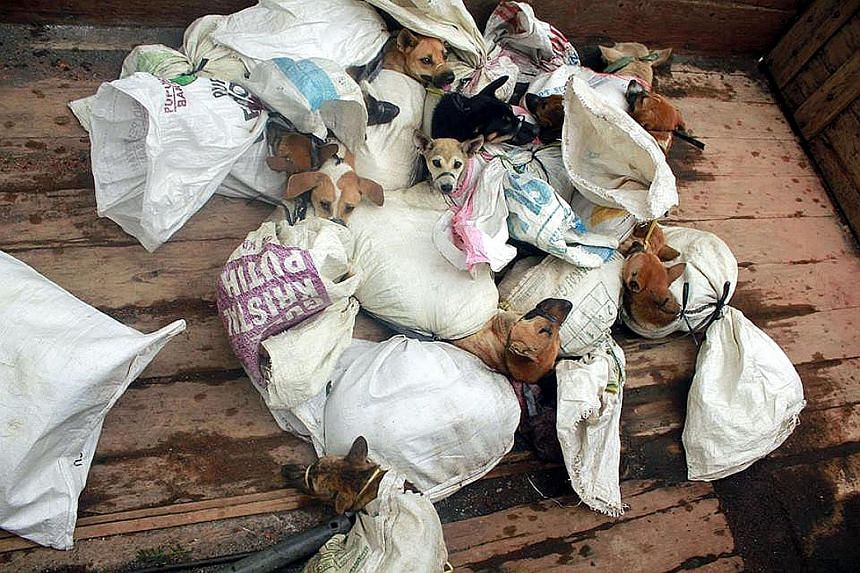 Dogs captured for the dinner table. Dog meat is regarded as a delicacy in many parts of Indonesia.
