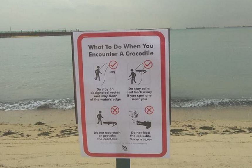 A sign advising beachgoers on what to do if they spot a crocodile was put up at the beach on Tuesday (Nov 7).