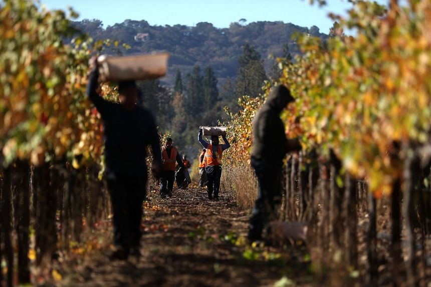 More than two weeks after deadly wildfires ripped through Sonoma and Napa counties, wineries are continuing to harvest wine grapes after being unable to during the fires. Many vineyards suffered fire and smoke damage and several wineries were destroy