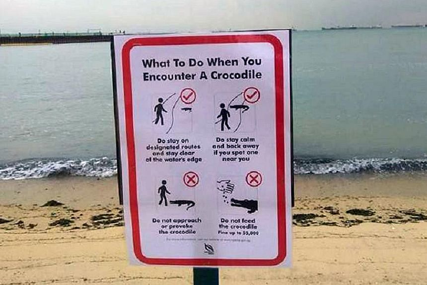 Signs have been put up at the beach near the National Sailing Centre advising beachgoers on what to do if they encounter a crocodile.