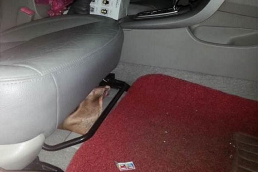 The dove was found in a pouch under the driver's seat.