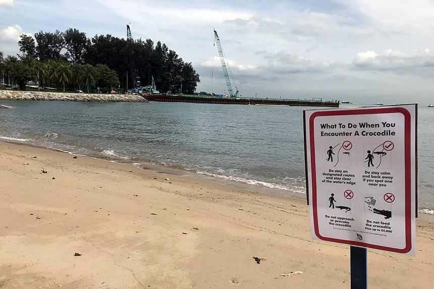 Top: A warning sign has been put up near the National Sailing Centre, which has also suspended water activities until further notice. Above: A screengrab from a video showing the crocodile that was spotted at a construction site at East Coast Park on