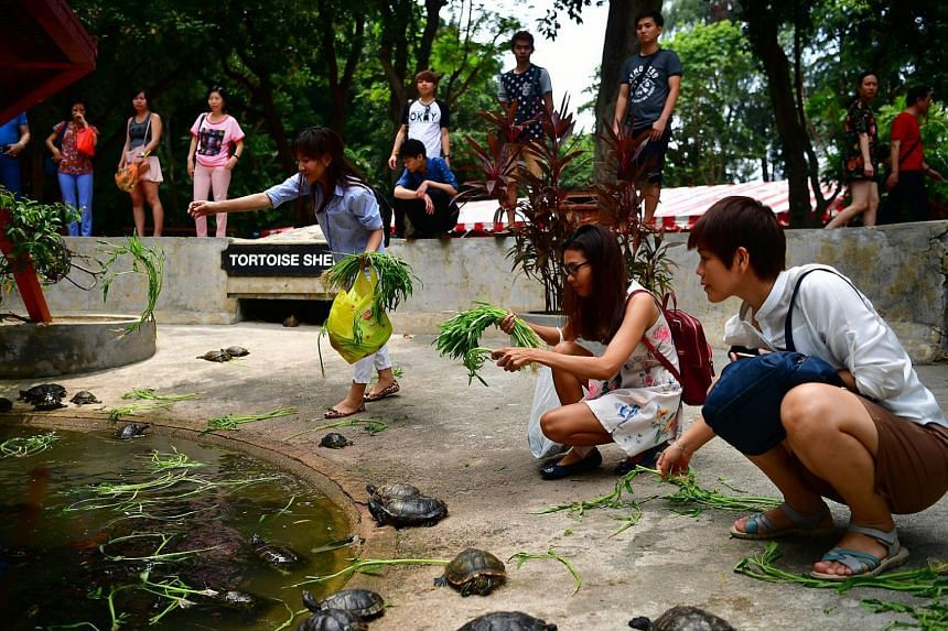 Devotees feeding the reptiles at the tortoise shelter at Kusu Island on Oct 27, 2017.