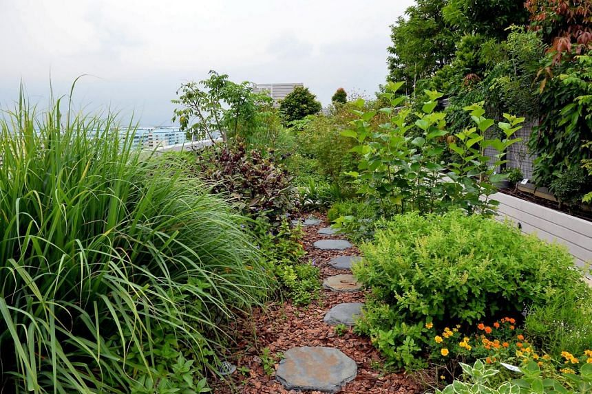 The enhancements aim to encourage landscaping on walls and roofs that not only beautifies the buildings, but also provides visual relief to passers-by and cools the ambient temperature.