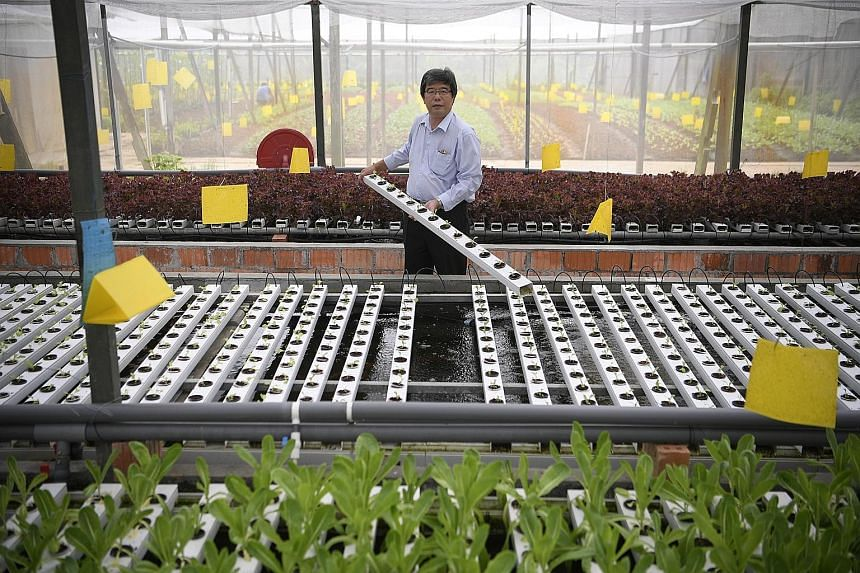 (Above) Mr Joseph Phua, who runs Orchidville farm in Sungei Tengah, uses an aquaponic system to rear fish and grow vegetables. He serves the produce and fish at a restaurant just beside his vegetable farms. (Left) Mr Phua constructed the hybrid syste